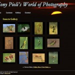 Tony Pioli's World of Photography - Insects Gallery